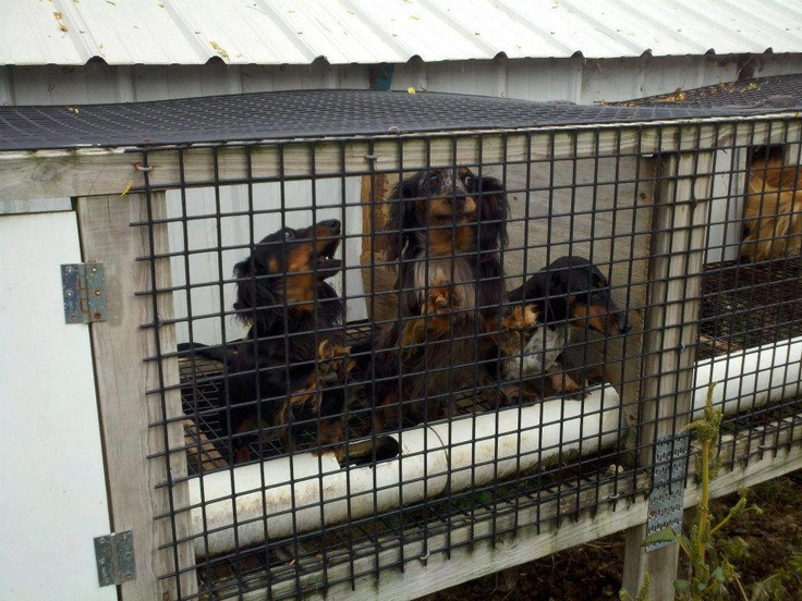 8 Best No More Puppy Mills Images On Pinterest Puppy