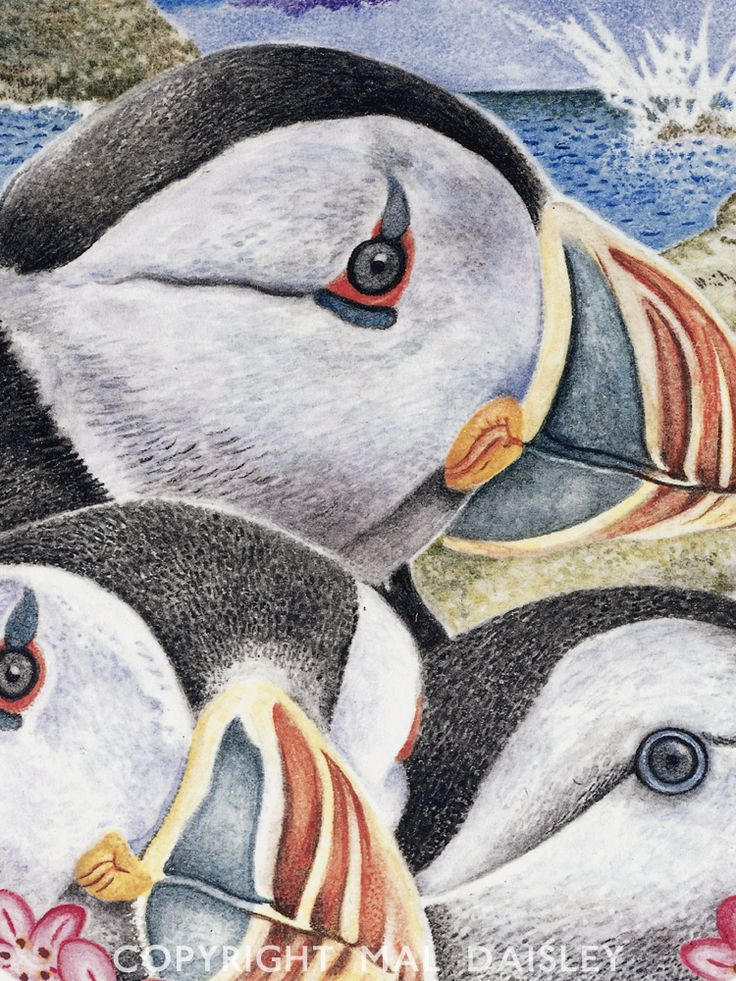 Puffins! Detail, in water colour.