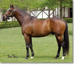 Pollard's Vision(2001)Carson City- Etats Unis By Dixieland Band. 3x5x5 To Northern Dancer, 4x5 To Nijinsky II & Native Dancer, 5x5 To Nasrullah. 23 Starts 6 Wins 7 Seconds 4 Thirds. $1,430,311. Won Illinois Derby(G2), Lone Star Derby(G3), Leonard Richards S(G3), National Jockey Club H(G3). Sire Of Champion Filly Blind Luck.
