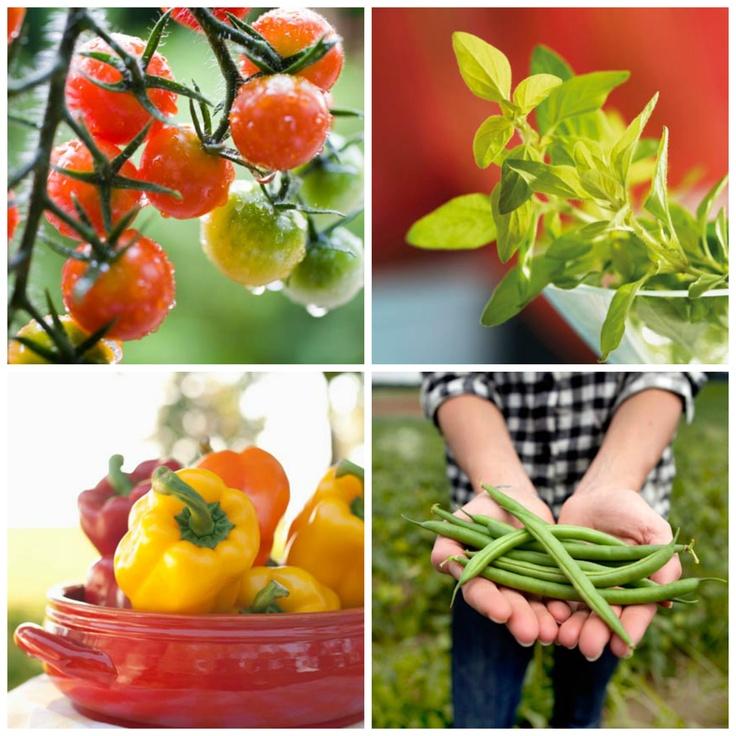 Las 10 verduras y hierbas más sencilla de plantar en casa