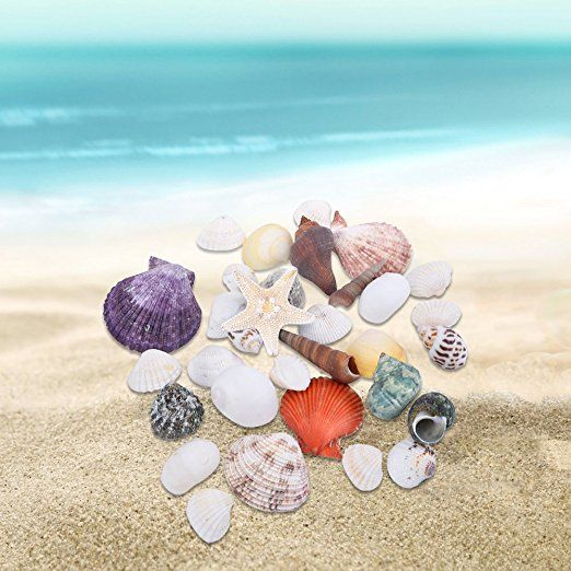 Amazon.com: Mudder Natural Sea Shells Mixed Beach Seashells for Decoration Arts Crafts: Home & Kitchen
