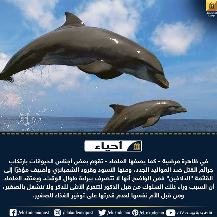تقتل الدلافين اللطيفة أيضا صغار جنسها في ظاهرة مرضية كما يصفها العلماء تقوم بعض أجناس الحيوانات بارتكاب جرائم القتل ضد المواليد الجدد ومنها Animals Whale