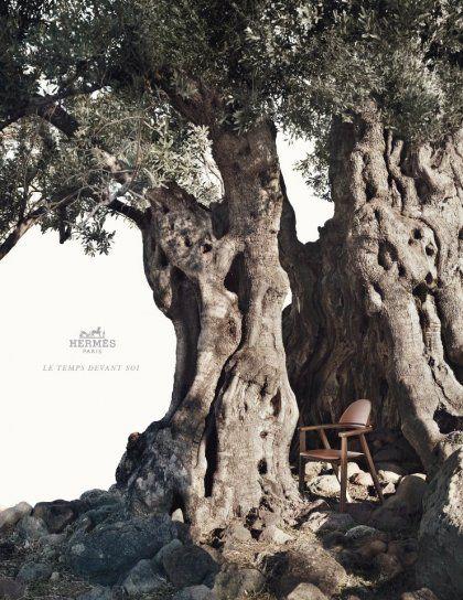 Greece, Olive Tree - Hermes