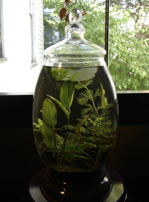 Glass jar water garden ponds water gardens and for Container ponds with fish