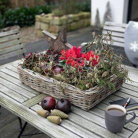 Popular Auch in der kalten Jahreszeit k nnen Balkon und Terrasse attraktive Ausblicke bieten Welche Winterpflanzen sich daf r am besten eignen und wie Sie sie vor