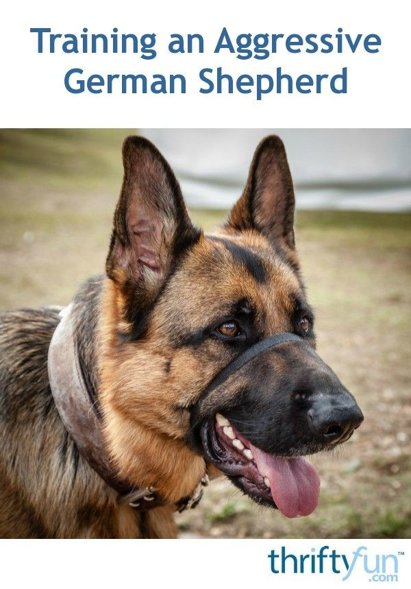Training An Aggressive German Shepherd Dog Training Aggressive