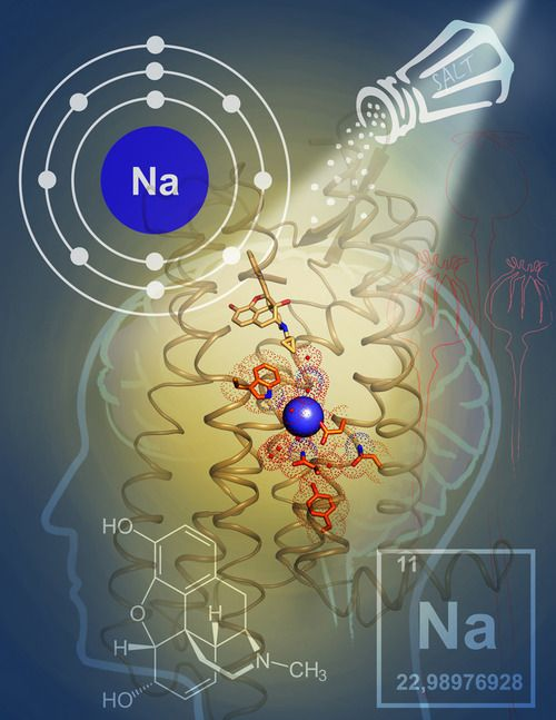 H U G E neuroscience breakthrough. Scientists Solve 40-year Mystery of HOW the element Sodium influences the signaling of a major class of brain cell receptors, known as opioid receptors and how mutations in genes coding for sodium receptor amino acids cause radical shifts in receptors signaling response. Very important for better understanding of mood disorders. http://www.nature.com/nature/journal/vaop/ncurrent/full/nature12944.html