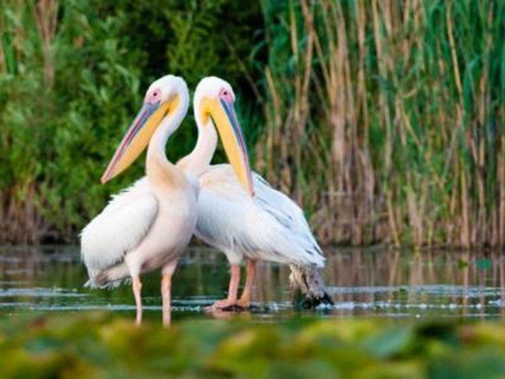 Thol Lake Bird Sanctuary - in Gujarat, India
