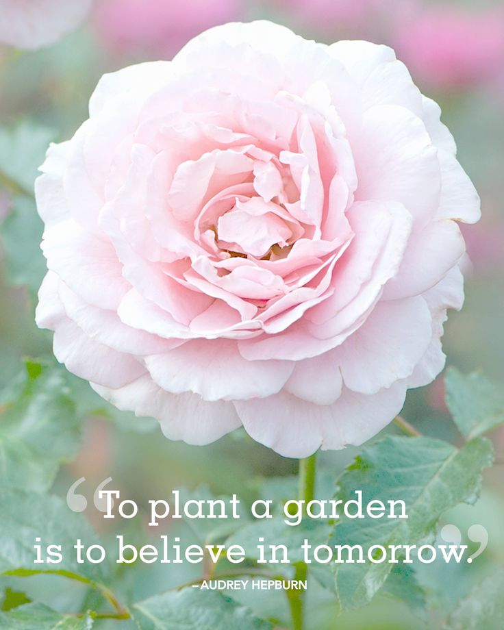 """24 Absolutely Beautiful Quotes About Summer Inspirational quotes and sayings about summer: """"To plant a garden is to believe in tomorrow."""" -Audrey Hepburn"""