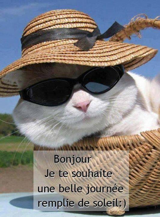 Bonjour, Je te souhaite une belle journée remplie de soleil :) | hello, I wish you a lovely day full of sunshine :)