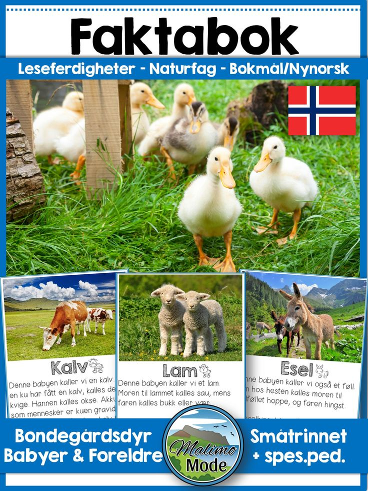 This reader is a Norwegian eBook about farm animals babies and their parents. The text is factual, to the point and easy to read. Each animal has two pages with photos and facts. Content in the eBook reader ★ Calf, cow and bull ★ Foal, mare and stallion ★ Piglet, sow and boar/hog ★ Donkey, jenny and jack ★ Kid, nanny and billy ★ Lamb, ewe and ram ★ Chick, hen and rooster ★ Kitten, molly and tom ★ Puppy and dogs ★ Rabbit, doe, buck