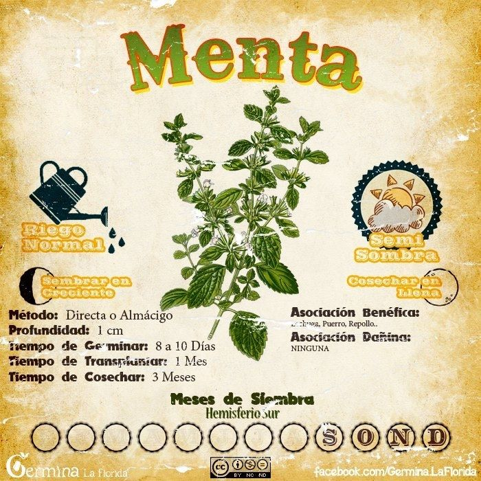 Huerta en Casa, calendario de siembra Octubre - Taringa!
