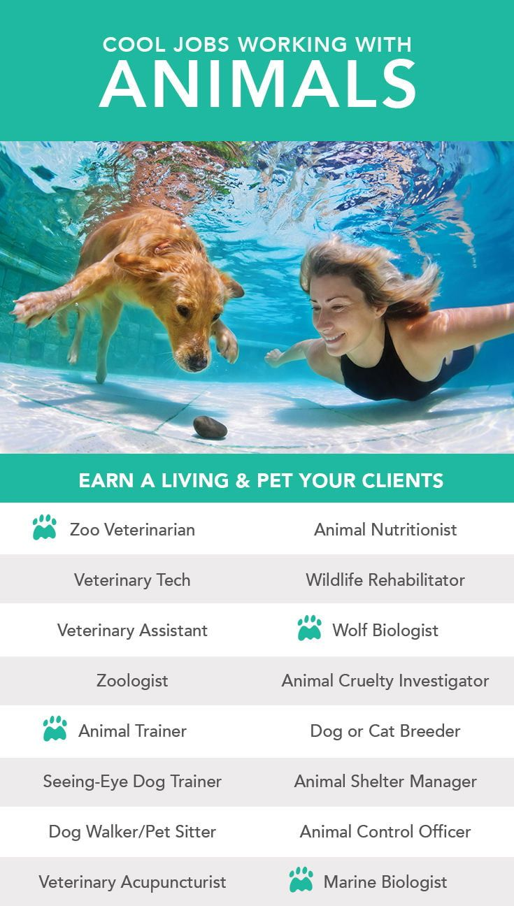 Pin On Jobs For Animal Lovers