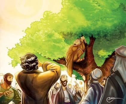 sycamore tree zacchaeus - Google Search
