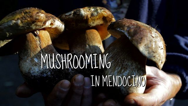 Mushrooming in Mendocino California with the great Ryane Snow..a wonderful man.