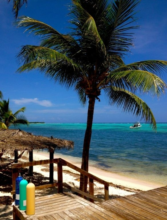 141 best comfort n 39 cayman 39 s images on pinterest for Best tropical beach vacations