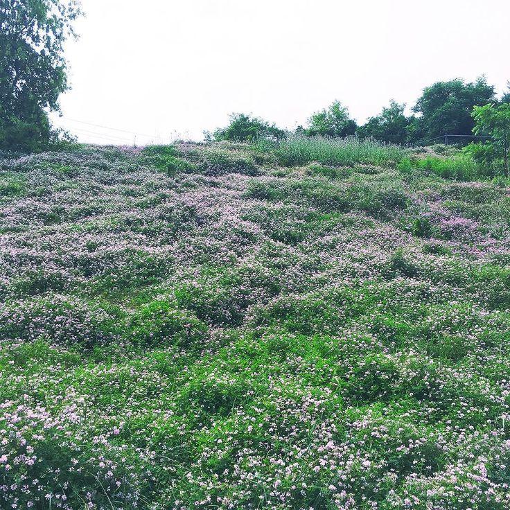 floralsfloralsflorals