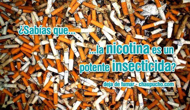 La nicotina es cincuenta veces más tóxica que la cocaína y cuatro veces más tóxica que el arsénico. La nicotina es un alcaloide contenido en las plantas solanáceas, especialmente en la del tabaco. Es un veneno muy poderoso, no sólo por su toxicidad, sino también por su rapidez. En pequeñas dosis no es letal, pero bastan 50 miligramos para matar a un adulto. Si bien es un veneno muy tóxico de efecto veloz, es muy delicado. La nicotina se destruye muy rápidamente por acción del agua, la luz o…