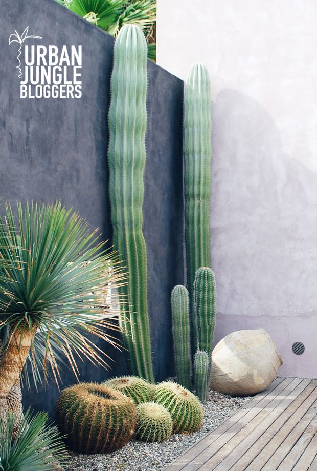 Urban Jungle Bloggers: #plantcolorpop by @abidare Gorgeous cactus!