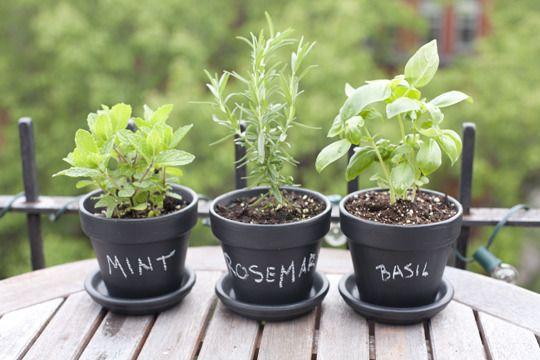 Spray paint with chalk board paint to identify your edible plants, brilliant!