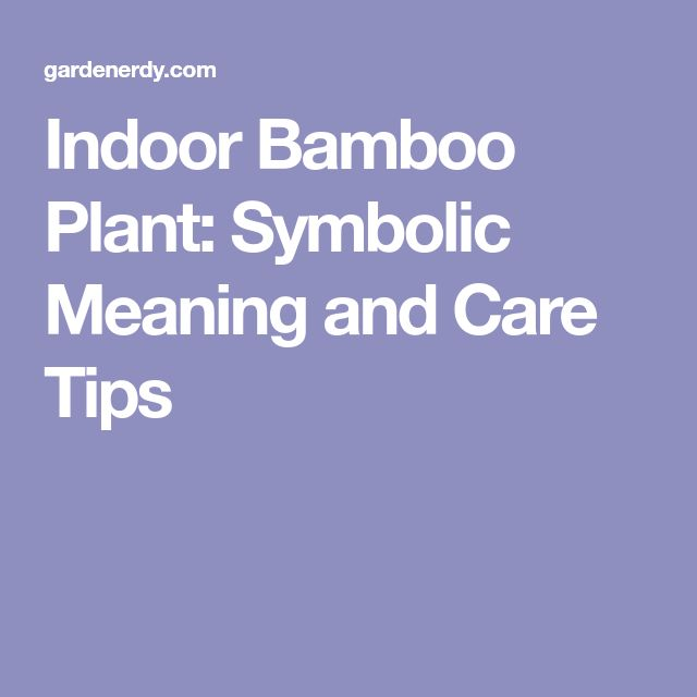 Indoor Bamboo Plant: Symbolic Meaning and Care Tips
