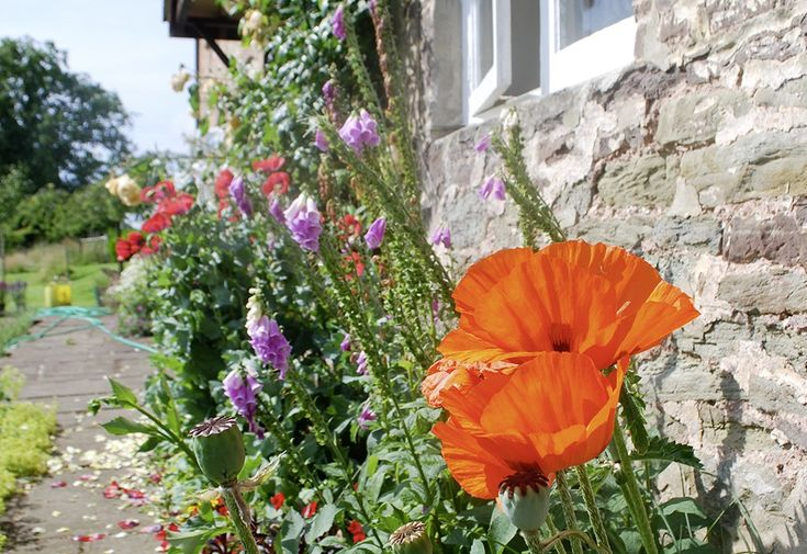 Grove Farm, Forest of Dean, Gloucestershire. We have a large garden and shaded terrace, where you can relax and enjoy the wonderful views over our organic dairy farm http://www.organicholidays.com/at/1325.htm