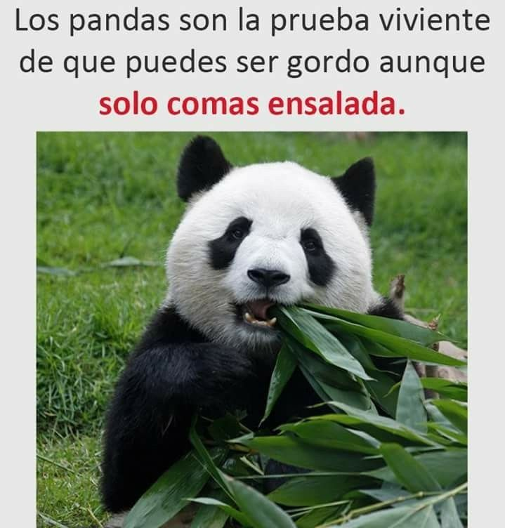 Imagenes Graciosas Para Whatsapp Lol Lmao Hilarious Laugh Photooftheday Friend Crazy Witty Instahappy Joke Jokes Joking E Female Panda Panda Macau