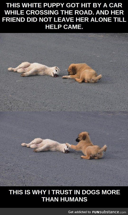 Dogs are pals for life