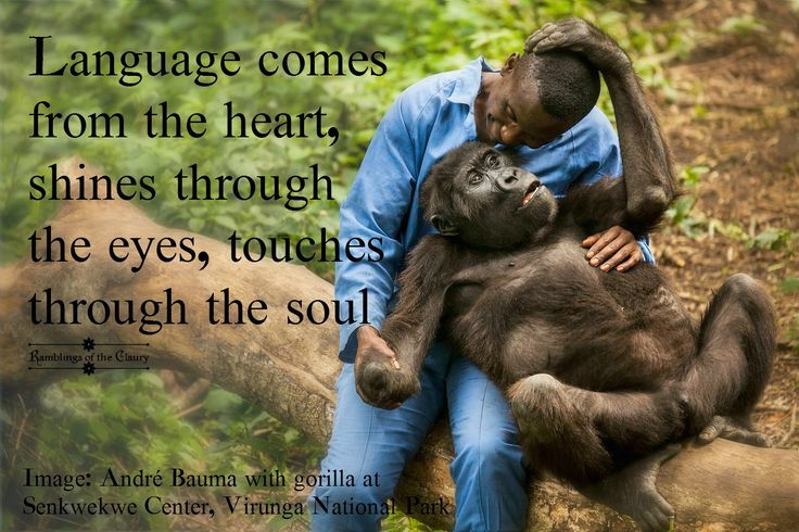 Language comes from the heart, shines through the eyes and touches through the soul #communication #language #animals #heart #love #gorilla #Virunga