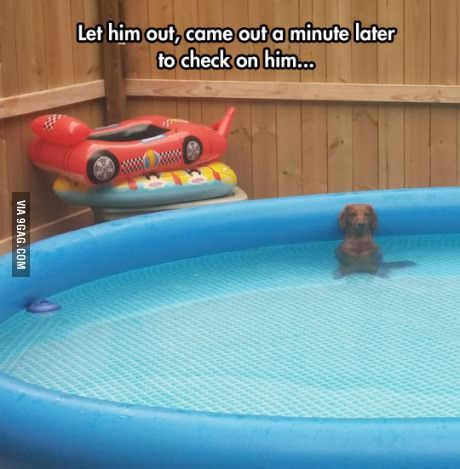 Dachshunds are awesome