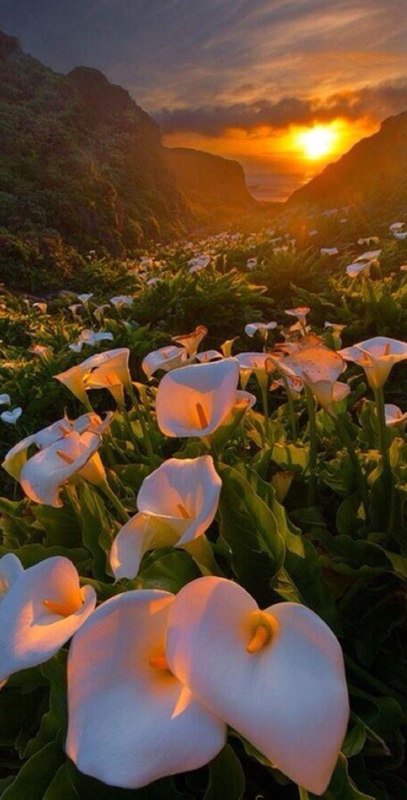 Calla Lily Valley, Big Sur, California, via Twitter