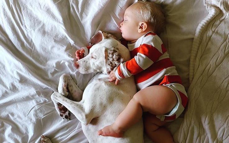 Bir Köpek ve Bebeğin Dostluğundan Yüreğinizi Isıtacak 14 Tatlış Fotoğraf