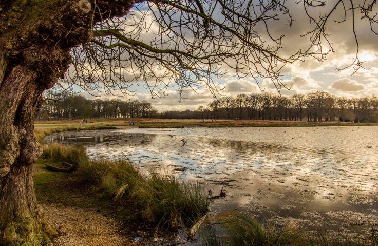 Richmond park - Lake by Tavo