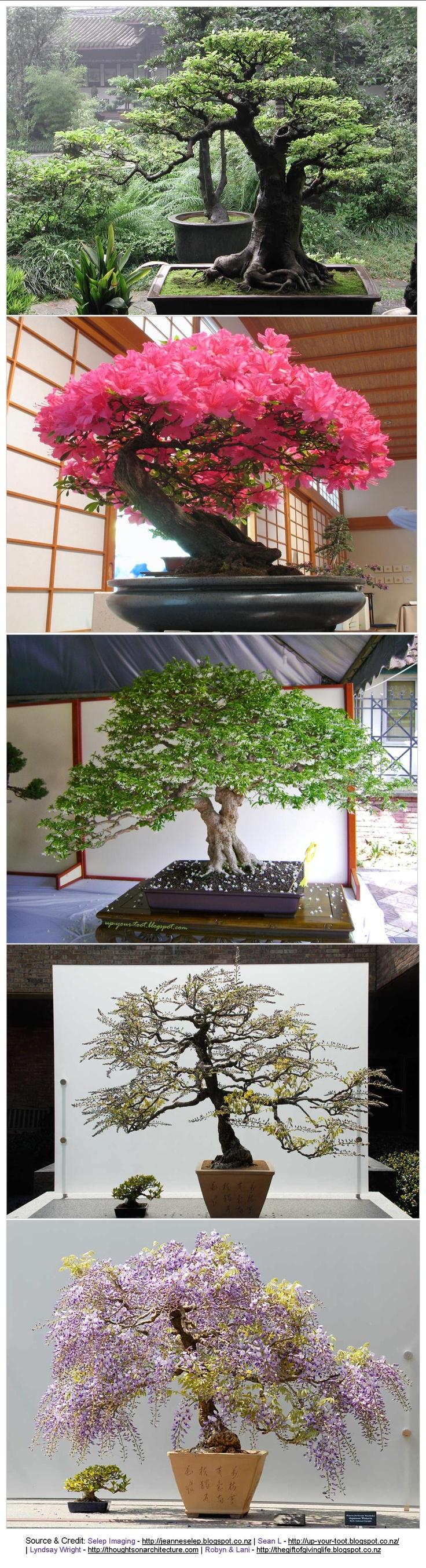 i♥Garden   .. love these oversize #Bonsai for #Indoor decor, or #Garden Ideas: Gardens Ideas, 11874365 Pixel, Bonsai Trees, Indoor Decor, Trees Canopies, Indoor Bonsai, Ideas Http Vur Me Tbw Bonsai, Bonsai Gardens, Bonsai Decor