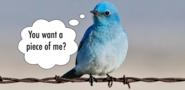 Twitter 2013: Future Looks Bright, But Will It IPO?
