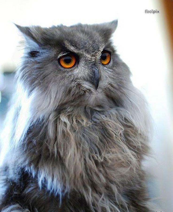 Кот и сова = КОТОСОВА Meowl\Cat and Owl Photo by/貓和貓頭鷹