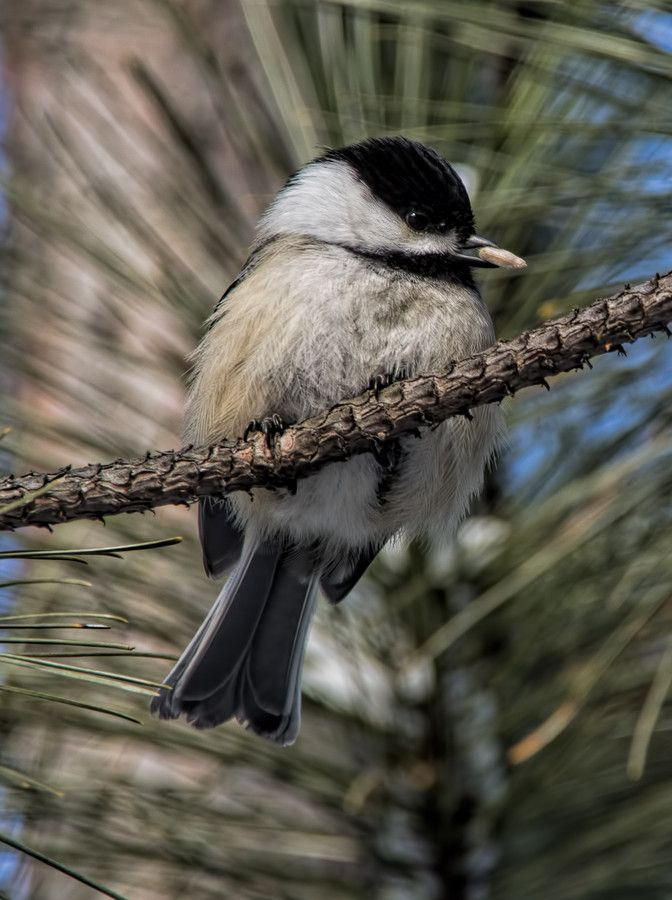 Perched In A Tree by Lee Bodson on 500px