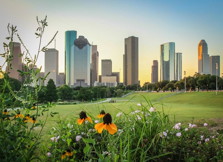Houston Skyline from Buffalo Bayou - Houston skyline from the point of view of wildflowers in a park. Houston's Buffalo Bayou features native Texas plants. The beautiful plants give the park character and charm that bring walkers, runners, and cyclist from the surrounding areas to the city center to visit. There are many things to do along Buffalo Bayou including eating a beautiful restaurant, but all of the activities involve taking in the culture and beauty of the the Bayou City, Houston.