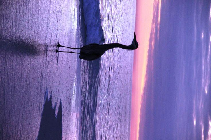 Silhouette @ sundown 12/2016 in Pensacola Beach.