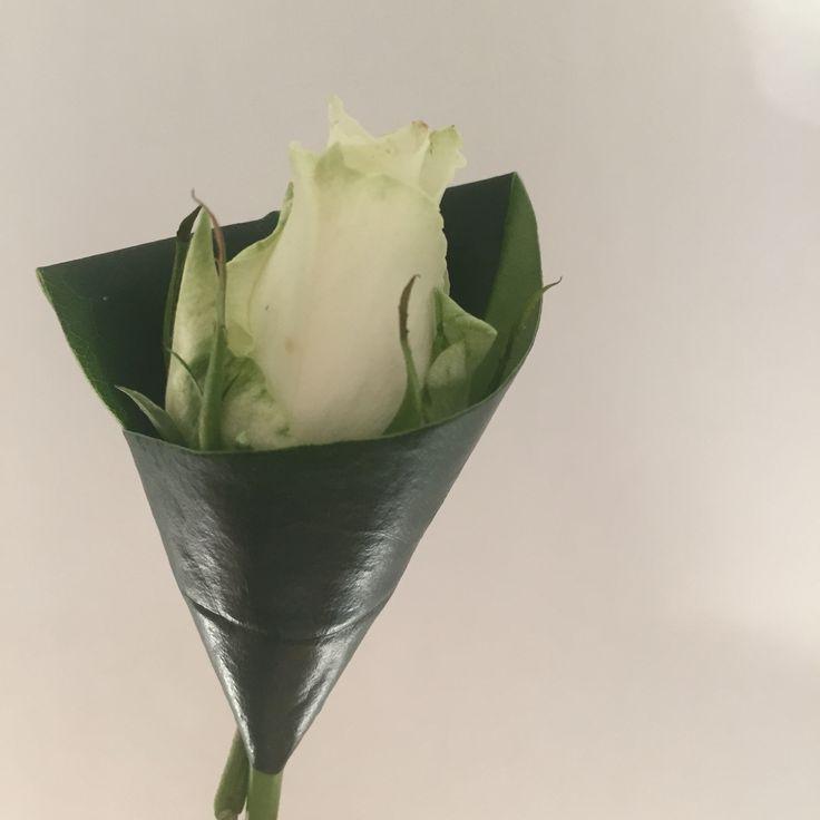 Vita rosen