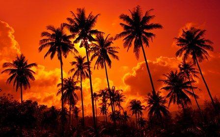 Кокосовые пальмы песчаный пляж закат таиланд красивая природа пейзаж небо облака украшения дома холст плакат