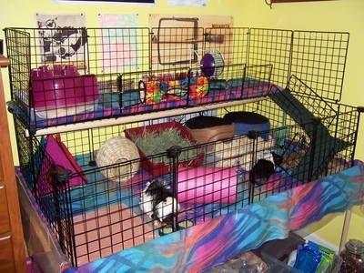 guinea pig c&c cage ideas Found on