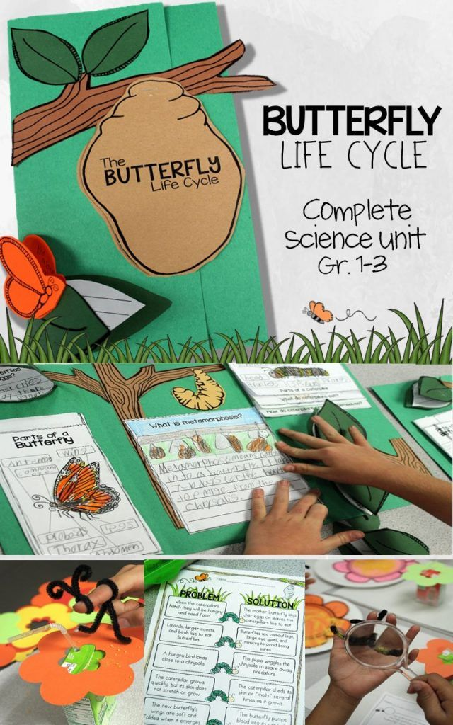 Get your students writing about science with this complete butterfly life cycle unit. Kids get up close and hands-on with the learning labs, mini lessons, literacy centers, and math integration. Includes a 2 week lesson plan, assessment and culminating foldable butterfly booklet / lapbook for 1st, 2nd, and 3rd grade students.