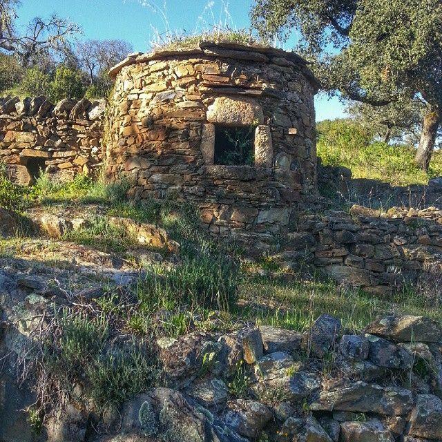 Mimetismo natural entre piedra