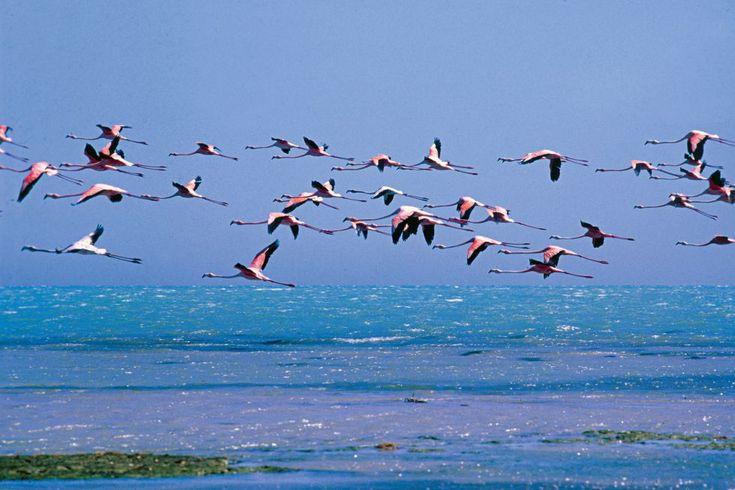 Santuario de fauna y flora los Flamencos (La Guajira) - Colombia