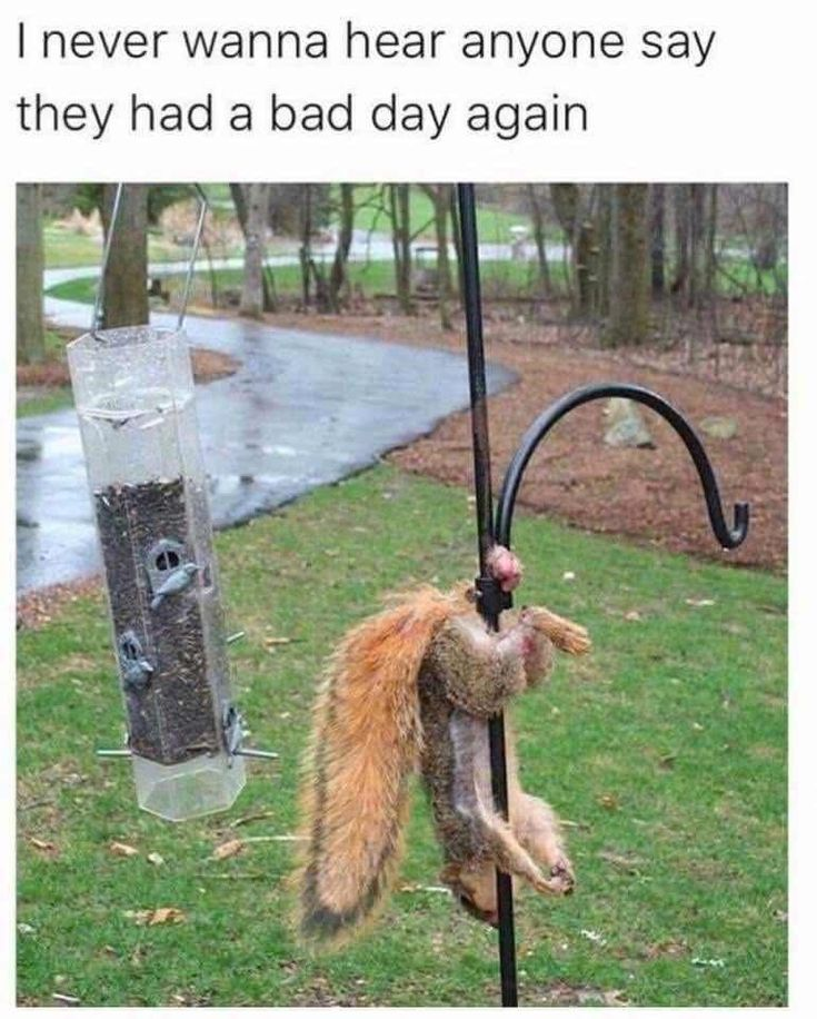 """""""Now what?""""~Squirrel.  //80 Today's Most Funny Memes (#160)//Humor//Funny animals//Bad day humor//"""