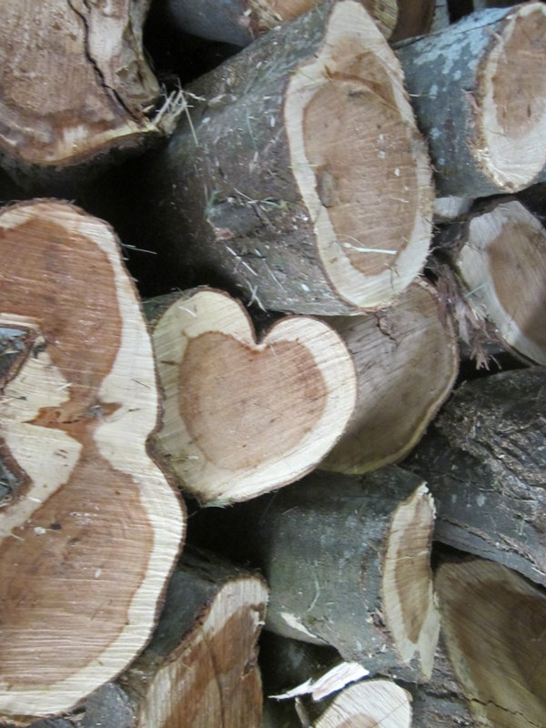 God's love all around everywhere in nature - in the woodpile...