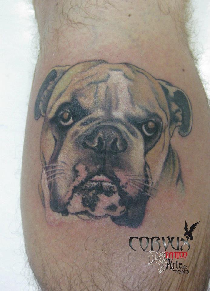 Dog, perro, realismo, bulldog Corvux Tattoo Diana Velasquez Medellin Colombia