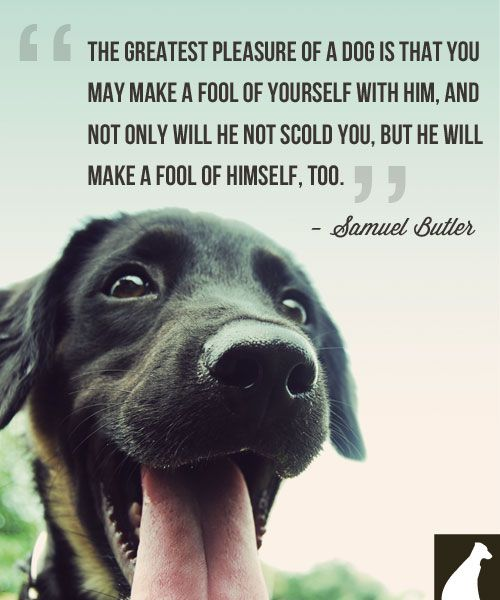 """The greatest pleasure of a dog is that you may make a fool of yourself with him, and not only will he not scold you, but he will make a fool of himself too."" Samuel Butler"