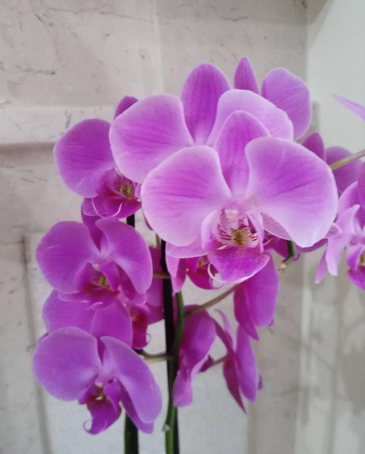 Un fiore è piccolo, ma la gioia che dona in un minuto / non è di quelle cose che hanno un inizio o una fine.(cit') #fiori #orchidea #colori #lilla #flowers #instaphoto